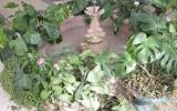 rodnik-pyatigorsk_service_winter-garden_04