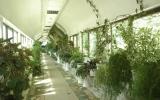 rodnik-pyatigorsk_service_winter-garden_09