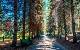 piket-kislovodsk_0_terr_park_10